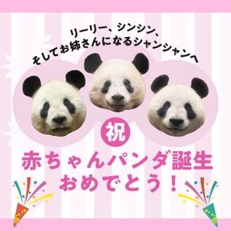 (祝)赤ちゃんパンダ誕生おめでとう!